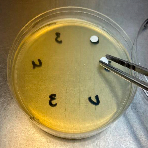 Placing of sterile disks on the 6 locations of the agar plate